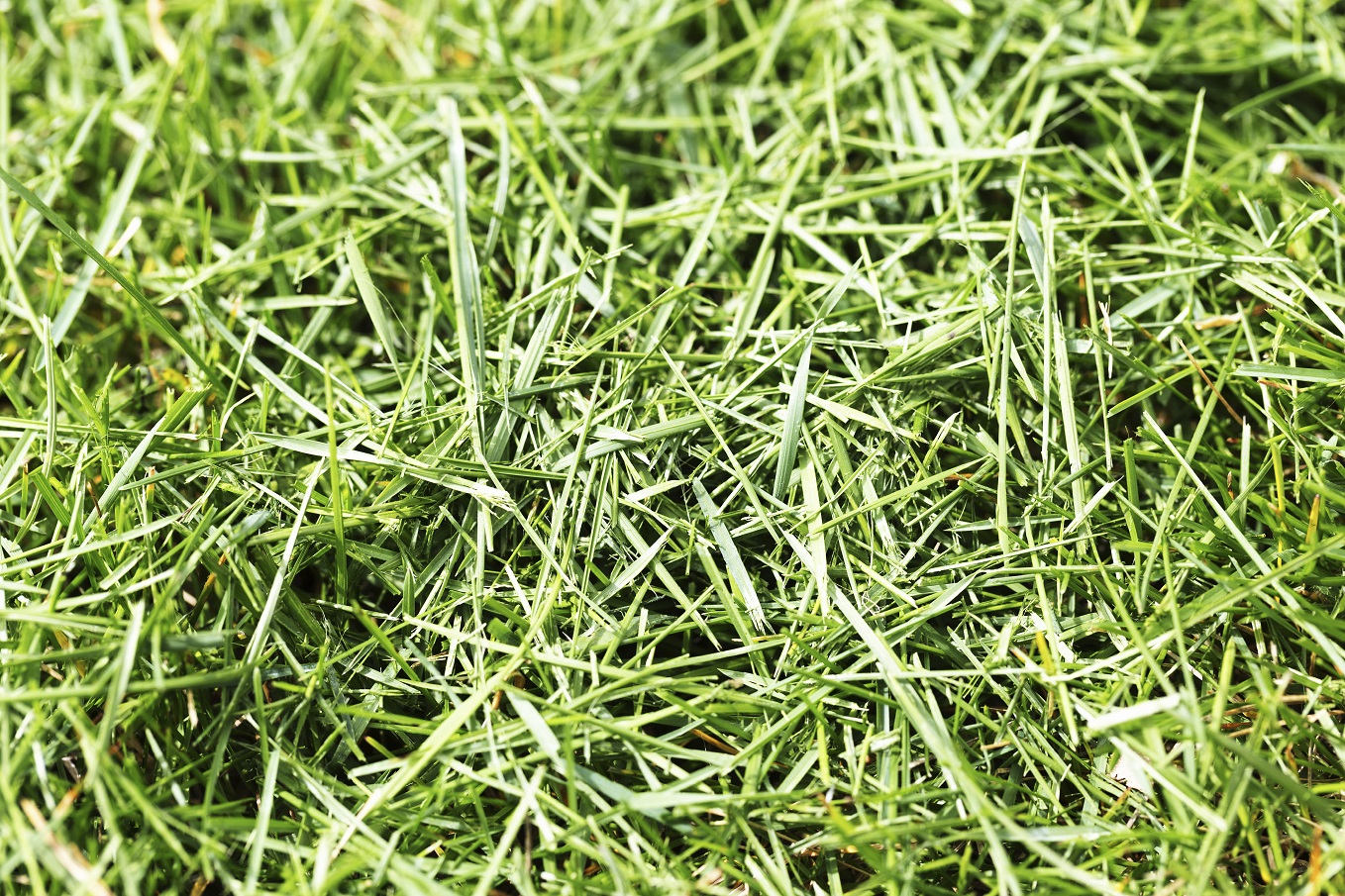 how to make paper from grass clippings