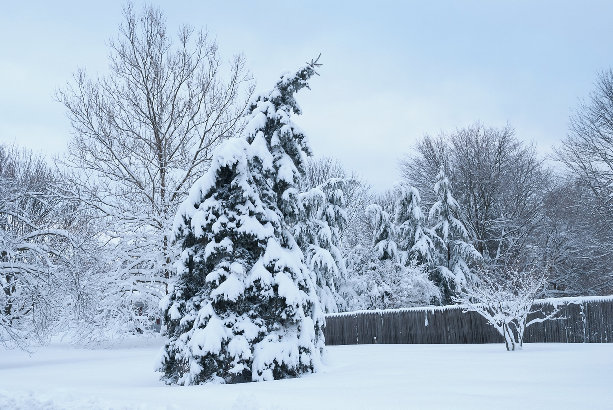 the effects of snow on your lawn u0026 garden turf unlimited