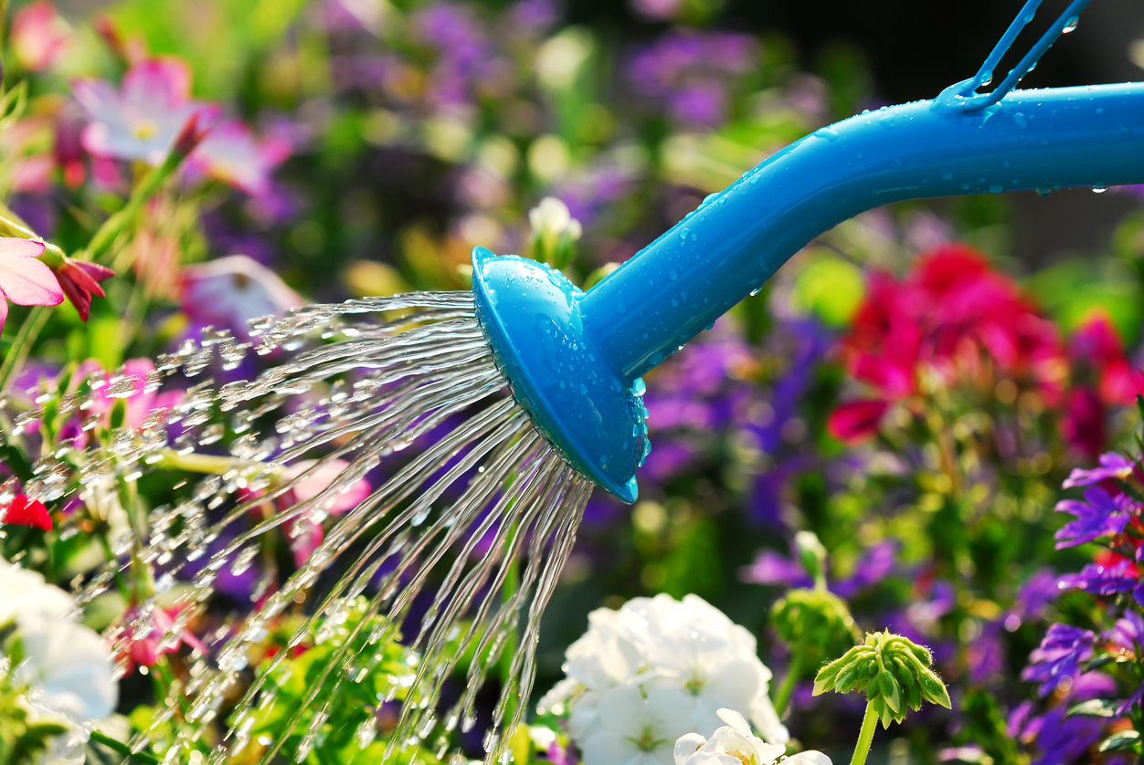 How You Should Be Watering Your Garden This Spring