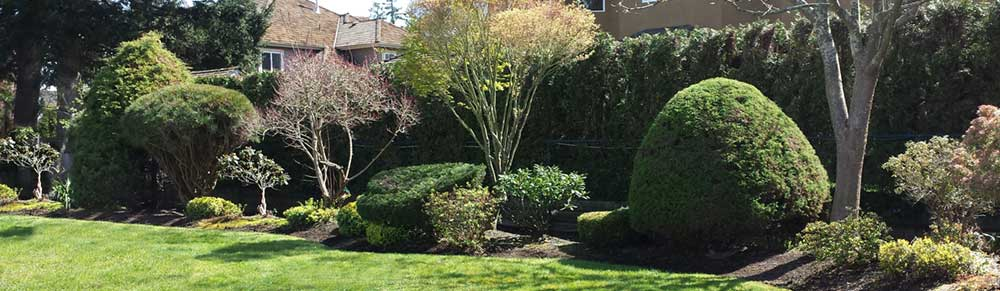 Turf Unlimited Inc. is dedicated to tree care service. Check out our tree spraying and shrub fertilization services.