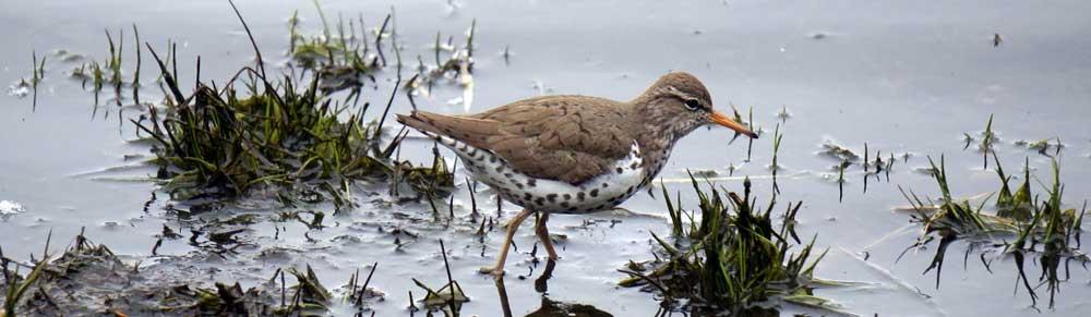 Bird in Westford Massachusetts