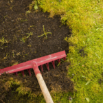 how to get rid of moss. Don't let lawn moss take over your yard!
