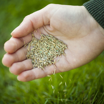 Overseeding is essential for fall lawn care