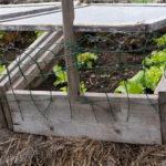 cold frame garden