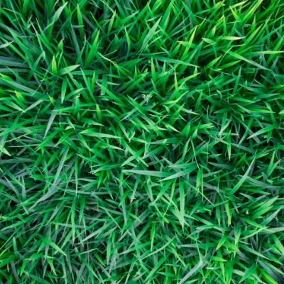 Achieve a healthy, lush lawn by choosing the fertilizer that is best for your lawn in Hudson, MA