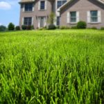 Apply the right fertilizer to help your lawn thrive in Tyngsboro MA