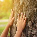 Our best tips to take care of trees all year long.