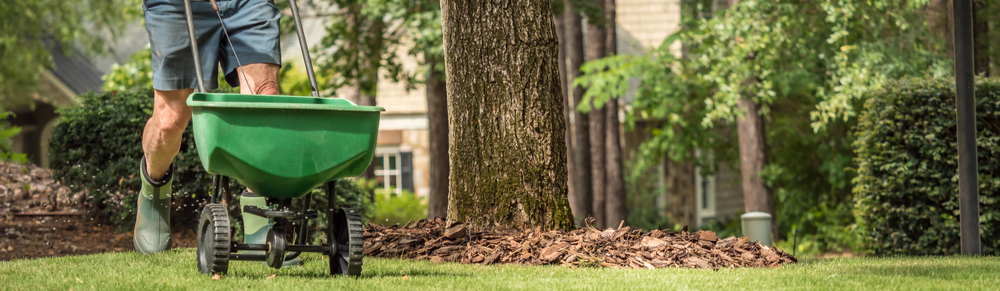 Overseeding your lawn is an effective lawn treatment component