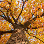 Protect your trees with these fall tree care tips so your Hudson, MA trees can survive the fall and winter and be ready to thrive in the spring.