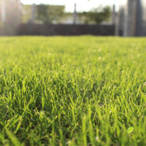Giving the holiday gift of lawn care from Turf Unlimited is the best way to ensure someone you love has a healthy, beautiful lawn all year long here in Hudson, MA.