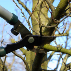 Winter pruning is an essential part of your 2020 tree care guide and will help keep your Massachusetts trees healthy.