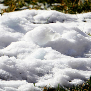 A great method of snow mold control is to prevent snow from piling up in areas on your Hudson, MA lawn.