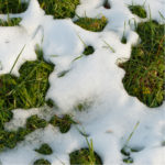 Snow mold control in Hudson, MA will help ensure you're only finding green grass under the melting snow.